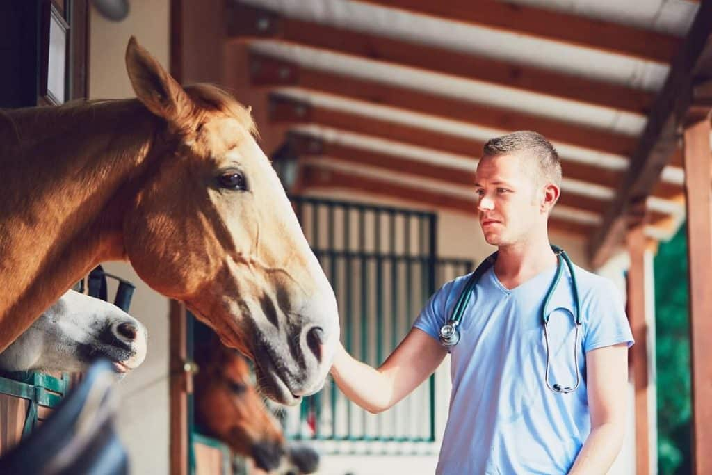 Equine Veterinary Practice Design
