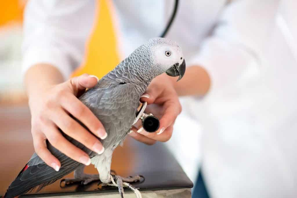 Treating birds at your vet practice
