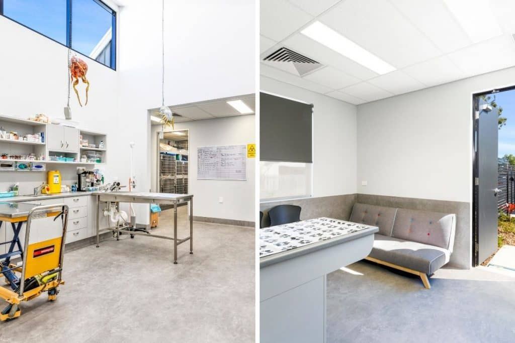 Veterinary practice treatment and consult rooms with lots of natural light