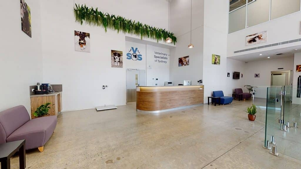 Veterinary practice waiting room spacious design