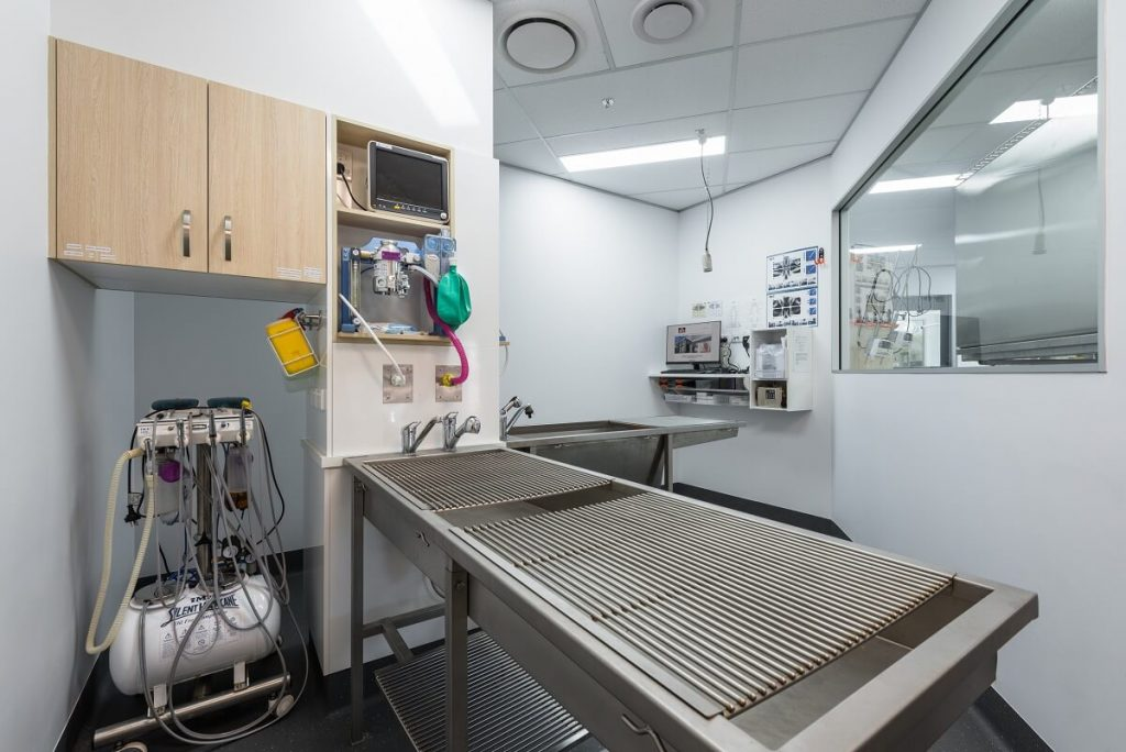 Bundaberg South Vet Practice treatment area