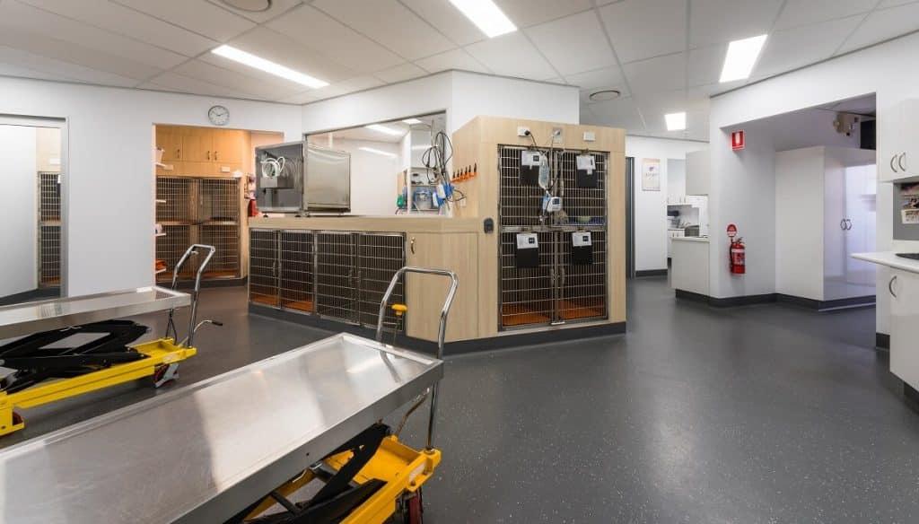 Bundaberg South Vet Practice reconfigured treatment room